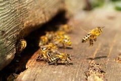 Bienen Stockbilder