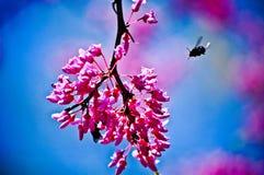Bienen-Aktivität Stockbild