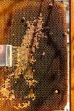 Bienen arbeitet an Bienenwabe Stockfotografie