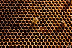 Bienen arbeitet an Bienenwabe Stockfotos