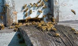 Bienen auf Bienenstock 20 Lizenzfreie Stockfotos