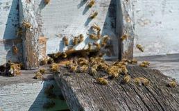Bienen auf Bienenstock 18 Stockfotografie