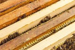 Bienen auf Bienenwaben Stockbilder
