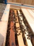 Bienen auf Bienenwabenfunktion Lizenzfreie Stockfotos