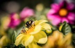 Bienen auf Blumen Stockfotos