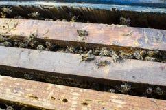 Bienen auf dem alten Rahmen mit Honig Lizenzfreies Stockbild