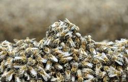 Bienen auf dem Bienenstock Stockbilder
