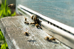 Bienen auf dem Bienenstock Stockbild