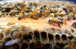 Bienen auf dem Bienenstock Stockfotografie