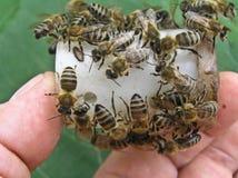 Bienen auf dem Kasten mit dem Kopf der Familie Lizenzfreies Stockbild