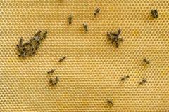 Bienen auf der Bienenwabe stockbild