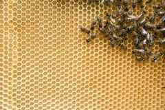 Bienen auf der Bienenwabe lizenzfreie stockfotos