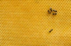 Bienen auf der Bienenwabe Lizenzfreies Stockbild