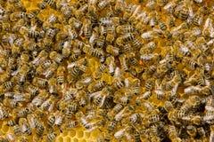Bienen auf einem Bienenstock Stockbild