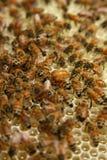 Bienen auf einem Bienenstock Lizenzfreie Stockfotos