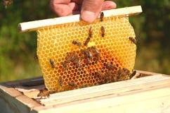 Bienen auf kleiner Hochzeitsbienenwabe Stockfotos