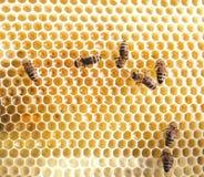 Bienen auf Rahmen mit Honig Stockfoto