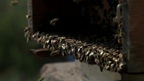 Bienen aus dem Bienenhaus heraus stock video footage
