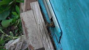 Bienen aus dem Bienenhaus heraus stock footage