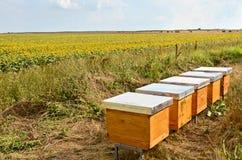 Bienen-Bienenstöcke Lizenzfreie Stockfotografie