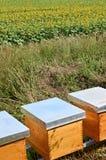 Bienen-Bienenstöcke Stockbild