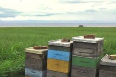 Bienen-Bienenstöcke durch das Meer stock video