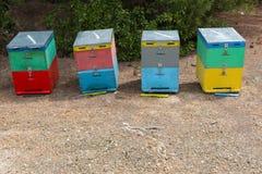 Bienen-Bienenstöcke nahe bei einem Kiefern-Wald im Sommer Honey Beehives in der Wiese Reihe von bunten Bienen-Bienenstöcken mit B Stockbild