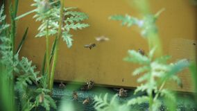 Bienen am Bienenstock stock footage