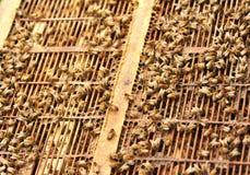 Bienen am Bienenstock Lizenzfreies Stockfoto
