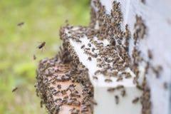Bienen am Bienenstock. lizenzfreie stockfotografie