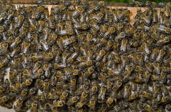 Bienen in Bienenstock 4 Stockfotos