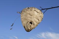 Bienen-Bienenstock, die wahre Sache stockfotos