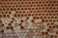 Bienen-Bienenstock-Kamm Stockfoto