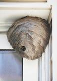 Bienen-Bienenstock-Nest, das vom Haus hängt Lizenzfreies Stockfoto