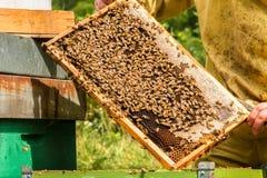Bienen in den Kämmen Stockfotos