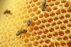 Bienen, die auf einer Bienenwabe, innerhalb des Bienenstocks sitzen Sechseckiger Hintergrund Lizenzfreies Stockbild