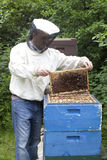 Bienen, die Honig bilden lizenzfreie stockbilder