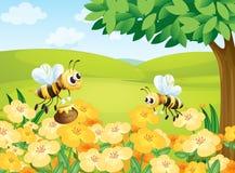 Bienen, die nach Nahrungsmitteln suchen Stockfoto