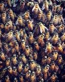 Bienen, die Spaß haben Stockbilder