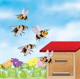 Bienen, die um den Bienenstock fliegen Stockfoto