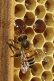 Bienen, die vom harten Winter kommen Stockbild