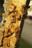 Bienen, die vom harten Winter kommen Lizenzfreie Stockfotografie