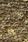 Bienen, die vom harten Winter kommen Lizenzfreie Stockfotos