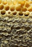 Bienen, die vom harten Winter kommen Lizenzfreies Stockfoto