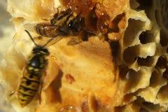 Bienen, die vom harten Winter kommen Stockfotografie