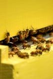 Bienen in einem beehove Lizenzfreie Stockbilder