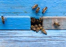 Bienen in einem Bienenhaus Lizenzfreie Stockfotografie