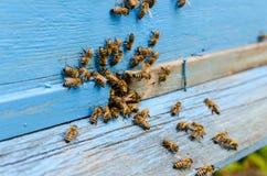 Bienen in einem Bienenhaus Stockfotografie