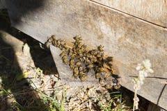 Bienen in einem Bienenstock im Sommer Stockfotografie