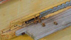 Bienen am Eingang zur Bienenstocknahaufnahme stock footage